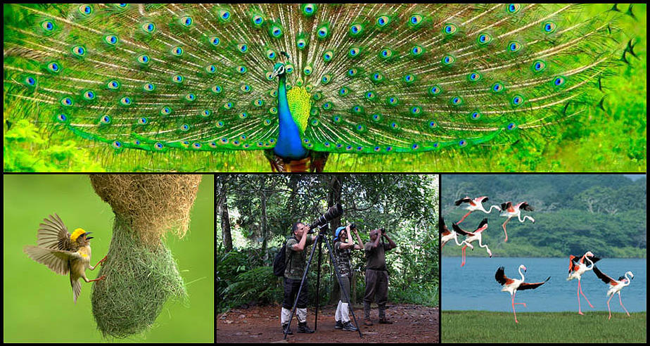 Bird Watching Tour In Sri Lanka (10 Nights / 11 Days)