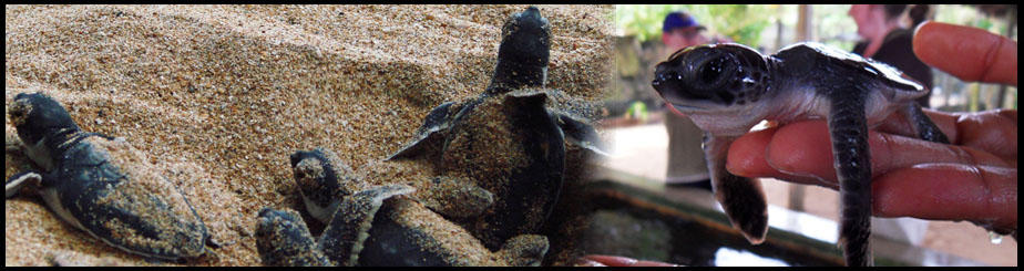 Turtle Hatchery Tour, Kosgoda (7 Nights / 8 Days)