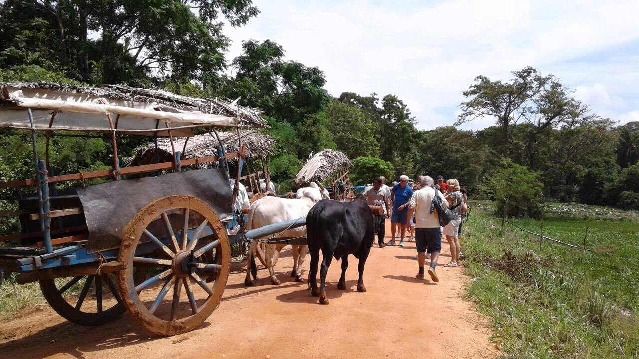 Understanding the Village Life